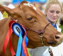 Thumbnail for Royal Cornwall Show