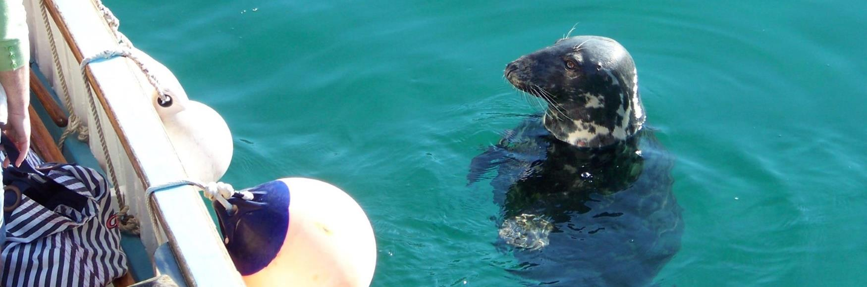 Look out for seals in Newquay Harbour