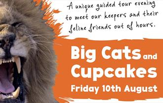 Fearsome Feasts: Big Cats and Cupcakes at Newquay Zoo