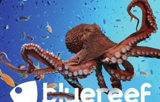 Deeply Creeply This October Half Term at Newquay's Blue Reef Aquarium