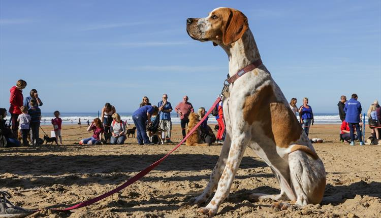 Family Dog Show at Watergate Bay